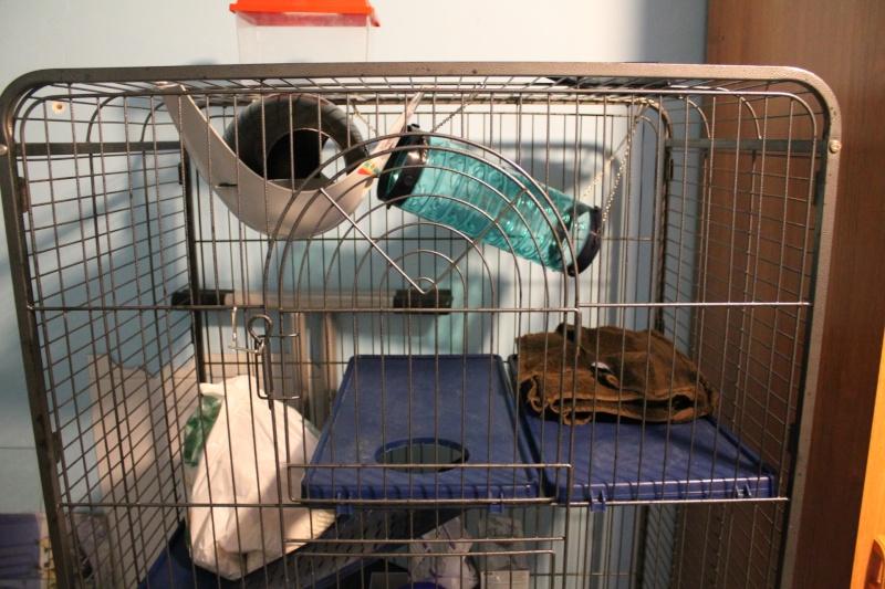Avis sur l'aménagement de ma cage ! - Page 2 Img_3312