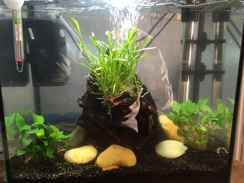Aquarium 30L  Image10