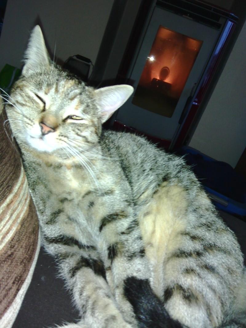 Jaloa, femelle, 01.05.2014, tigrée et rousse  Img_2015