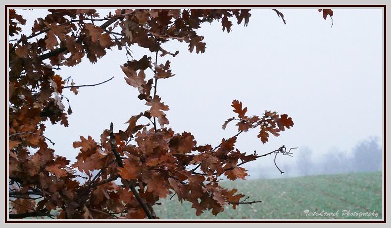 photo du matin, entre 2 averses ! Paysag12