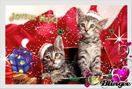 All about CATS!~ Jojeux10