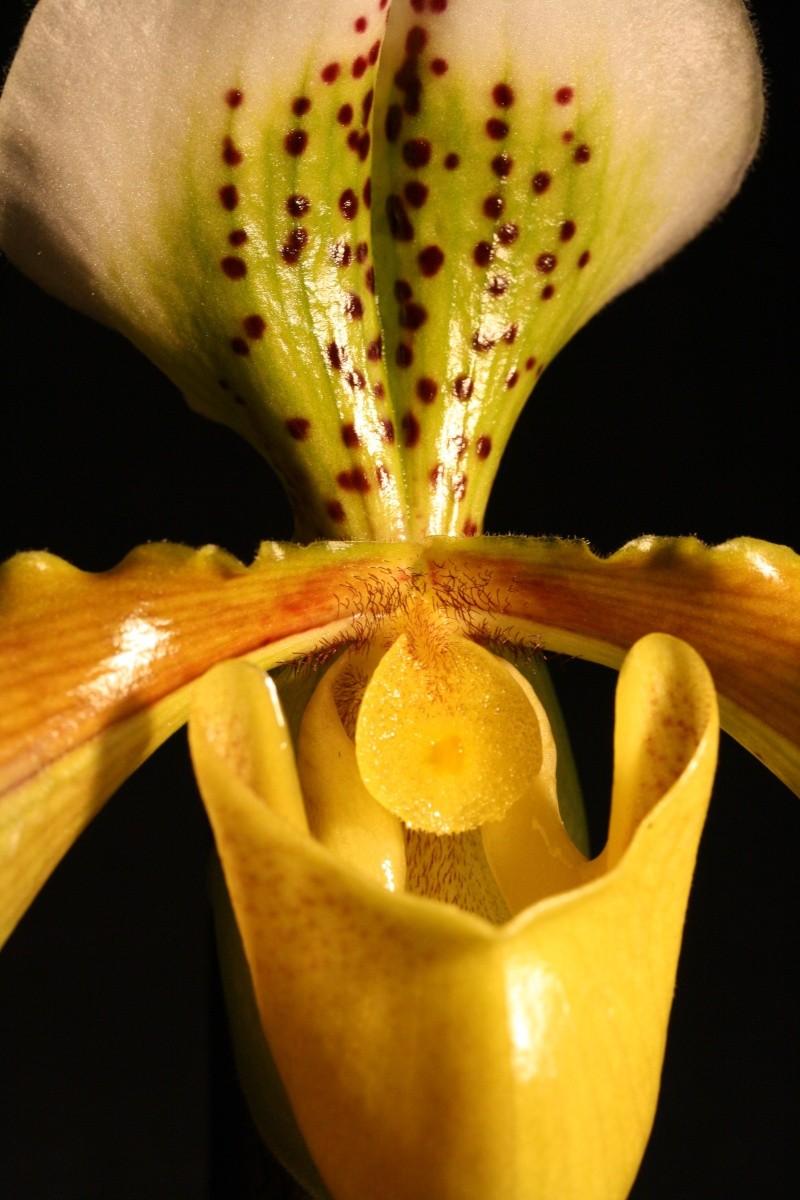 Orchideen 2 (fortlaufende Seiten 200 bis 300) - Seite 5 Frauen10