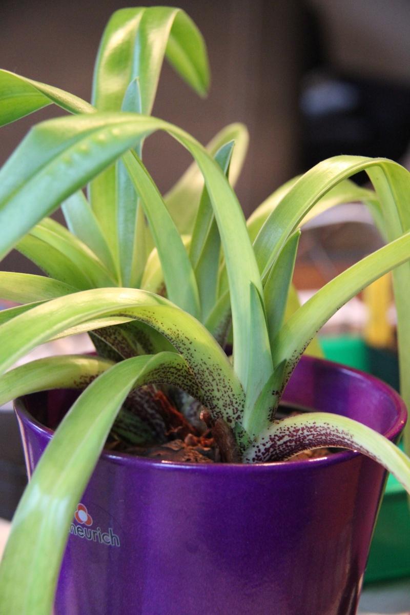 Orchideen 2 (fortlaufende Seiten 200 bis 300) - Seite 4 Orchid10