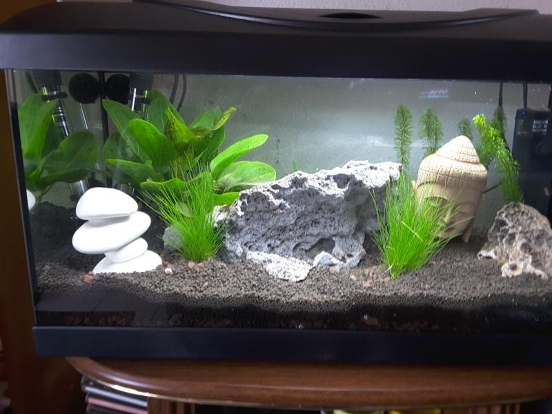 Présentation de mon aquarium 20151215