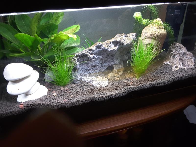 Présentation de mon aquarium 20160110