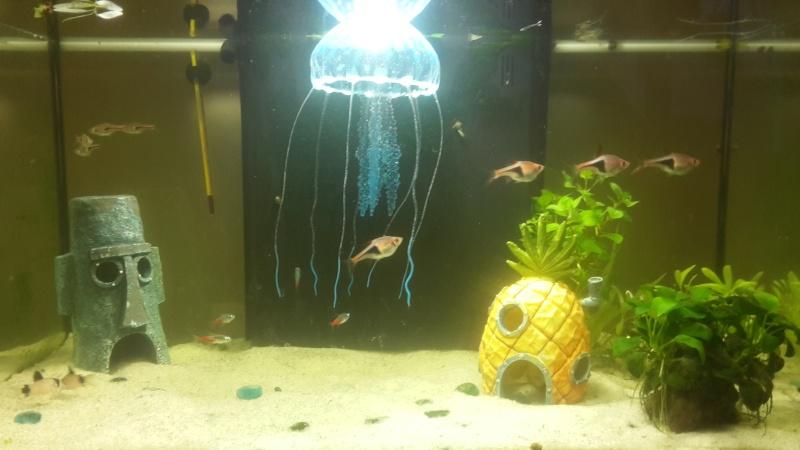 Mon premier aquarium, un 60L - Page 2 20151211