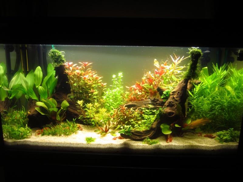 Mon 1er vrai projet : aquarium 200 L planté Bac_j112