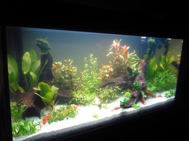 Mon 1er vrai projet : aquarium 200 L planté Img_6010