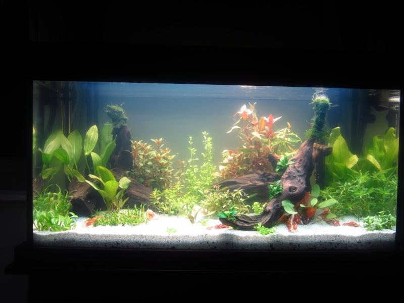 Mon 1er vrai projet : aquarium 200 L planté Img_6011