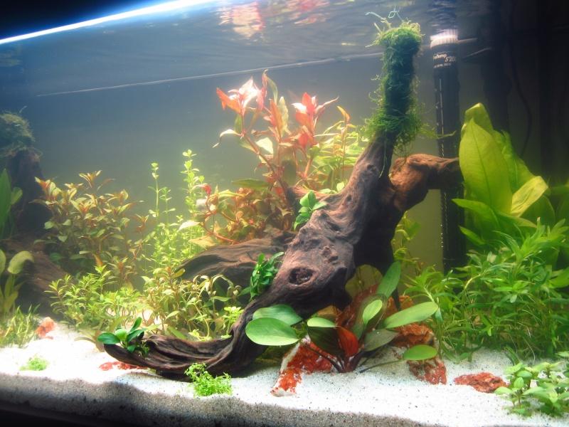 Mon 1er vrai projet : aquarium 200 L planté Img_6012