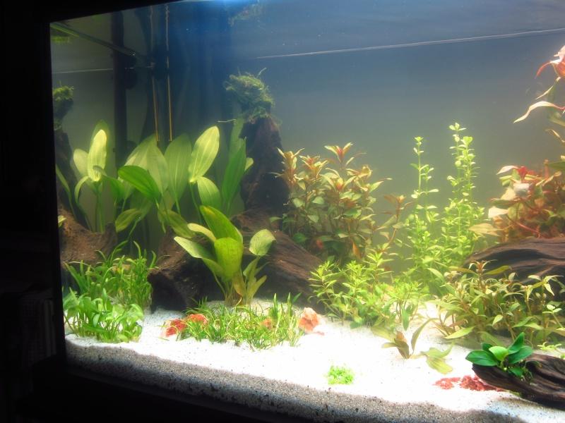 Mon 1er vrai projet : aquarium 200 L planté Img_6013