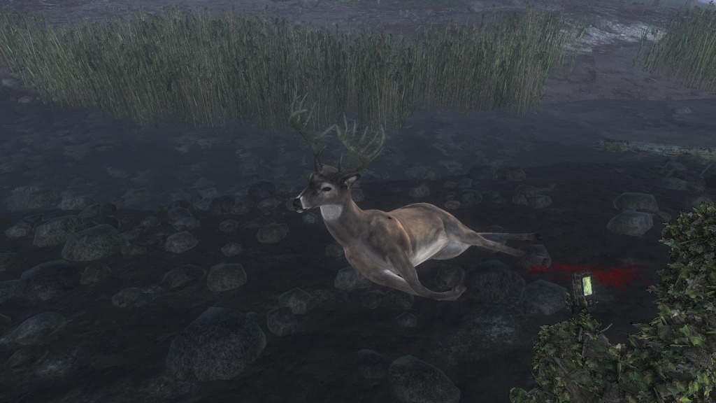 Everybody loves Whitetail Deer Competizione di San. Valentino 223a9a11