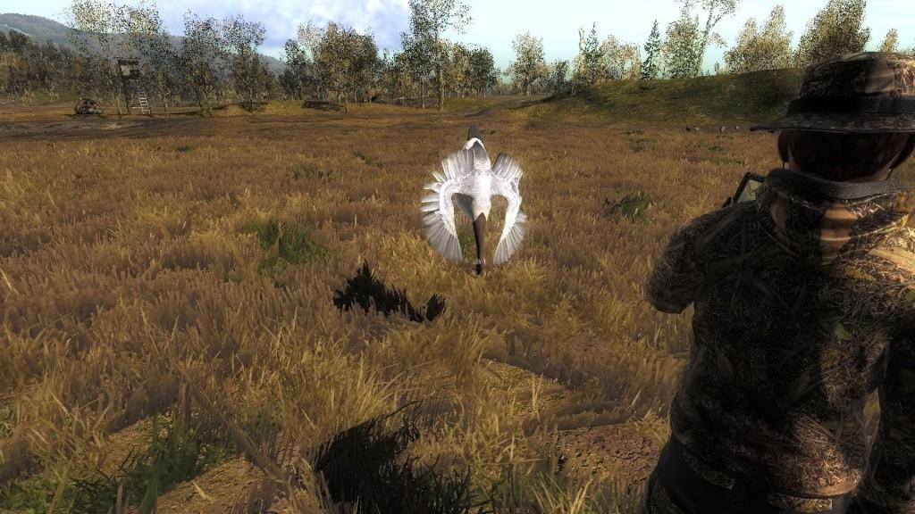 Oca canadese albina 49e29610
