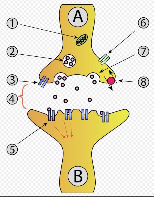 Le SOCIOLOGISME Neuron10