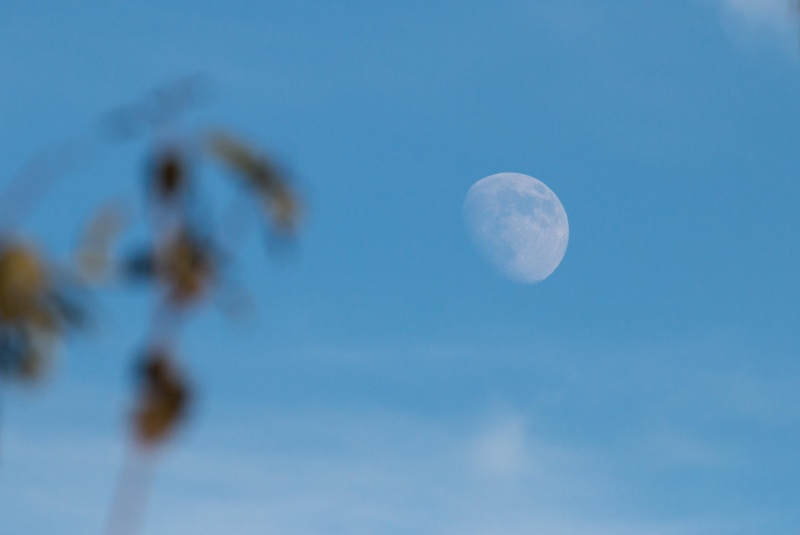 Transparent/Translucent Moon Img_9810