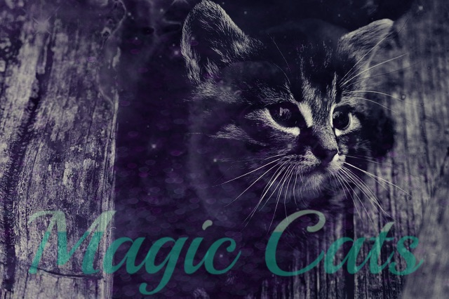 Magic Cats