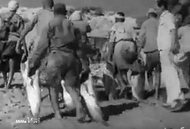 tifnit - Nos ancetres pecheurs de Tifnit et cote atlantique du Souss Tifnit15