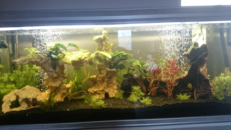 nouvel aquarium aquatlantis fusion 150 Dsc_0816