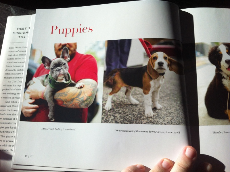 Livre The dogist Img_6114
