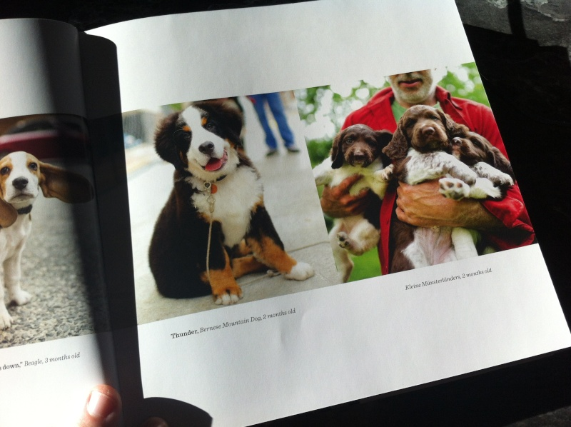 Livre The dogist Img_6115