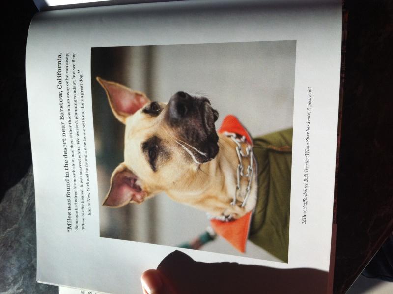 Livre The dogist Img_6118