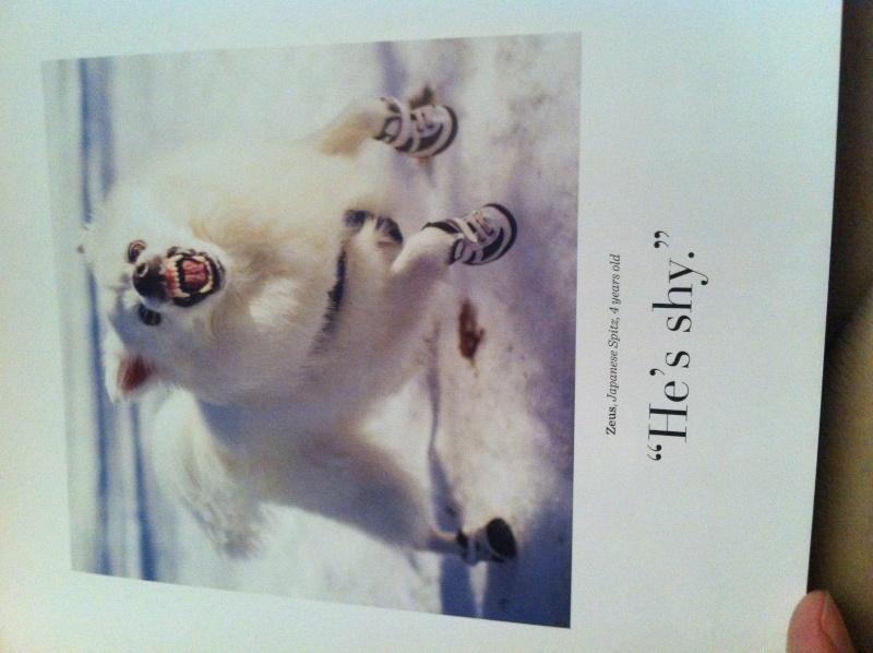 Livre The dogist Img_6123