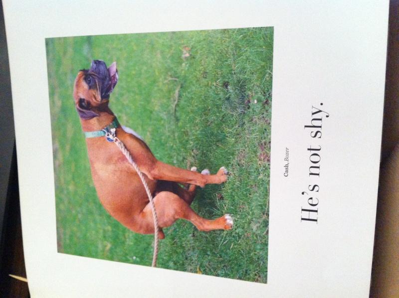 Livre The dogist Img_6124