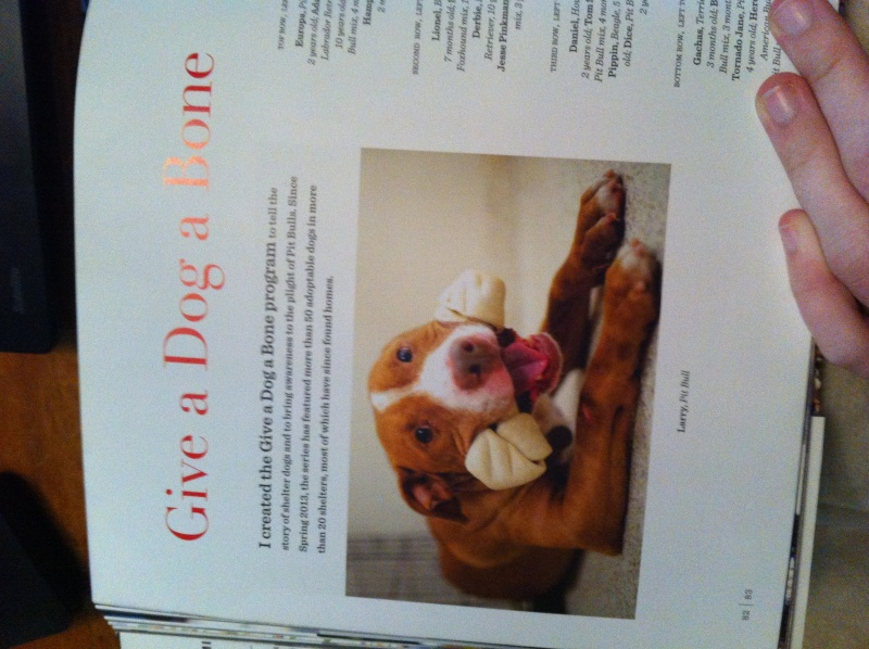 Livre The dogist Img_6125