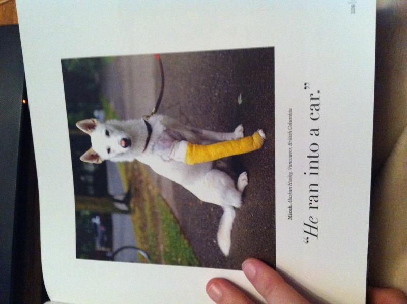 Livre The dogist Img_6127