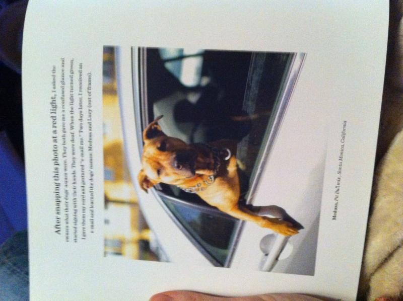 Livre The dogist Img_6131