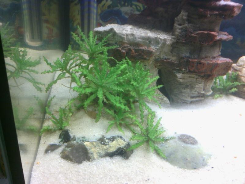 aquarium 60 L Img_2014