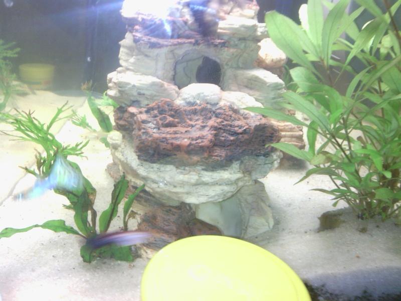 aquarium 60 L Img_2016