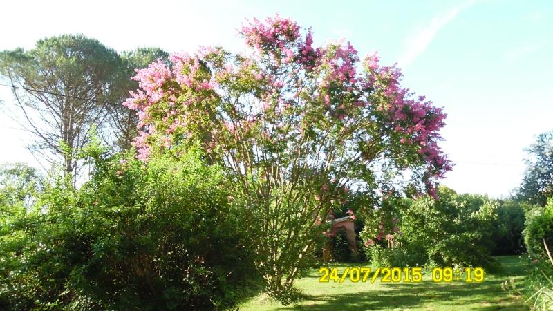un arbuste en fleurs Sam_0025
