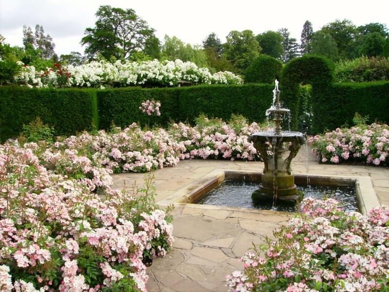 Rose Garden 511