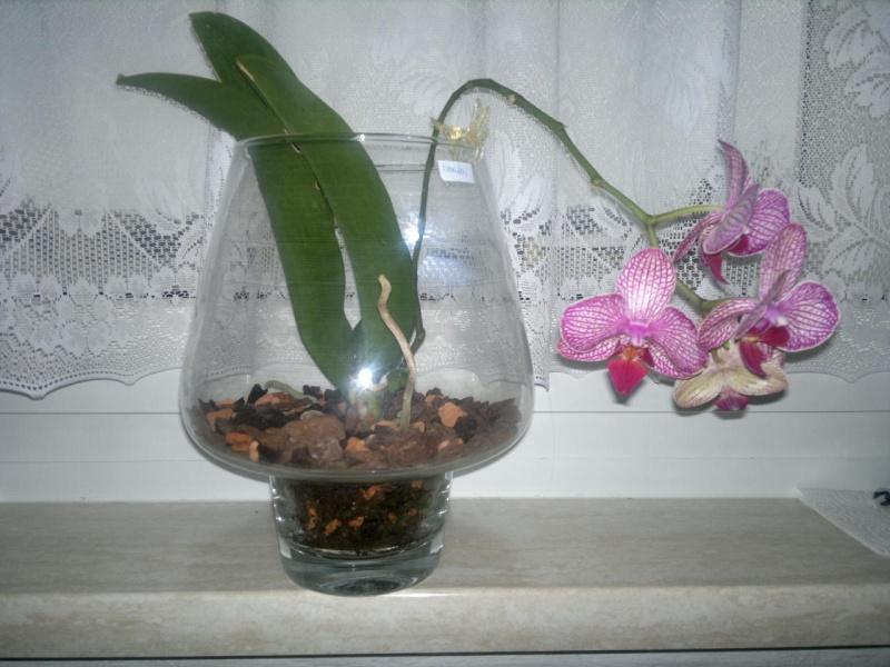 Orchideen in Glasvasen 4 (SGK) - Seite 16 00210