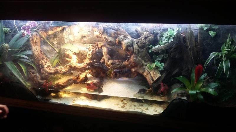 creation d'un aqua terrarium pour dragon d'eau 20160113