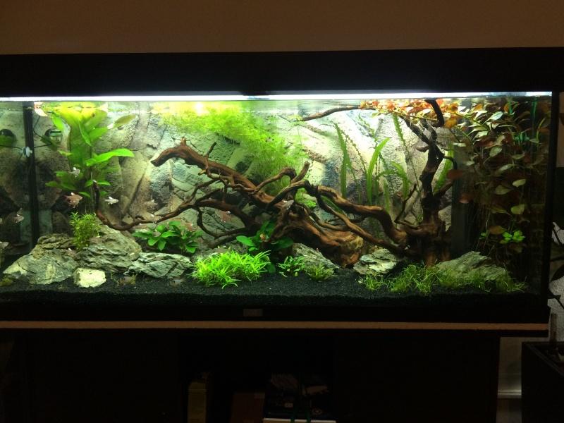 mon aquarium  Img_3711