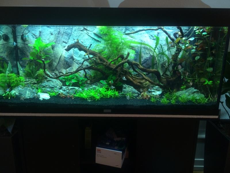 mon aquarium  Img_3815