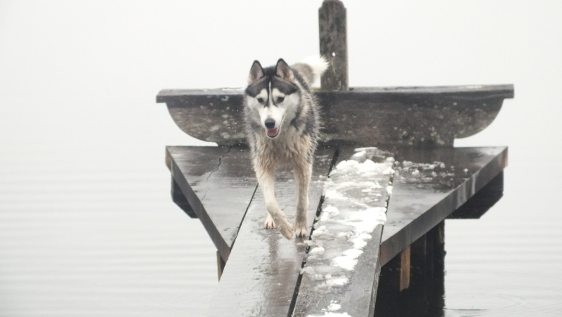 Lo-Jack Alias Ghost (Sibirian husky) - Page 2 Dscf5410