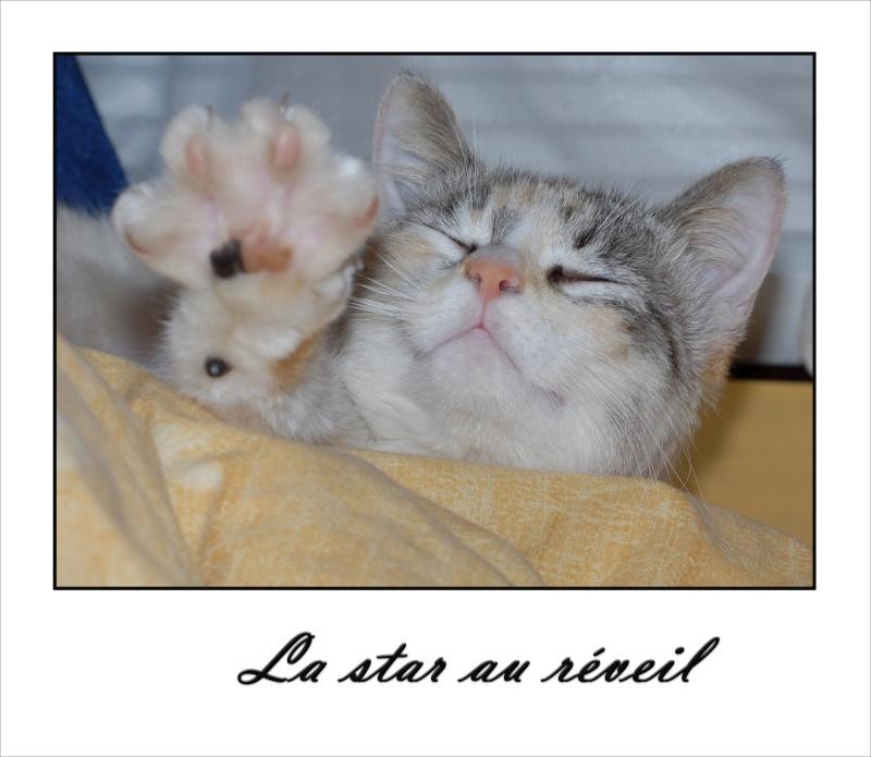 Vivre avec un......chat dans le camion! - Page 3 Noiset13