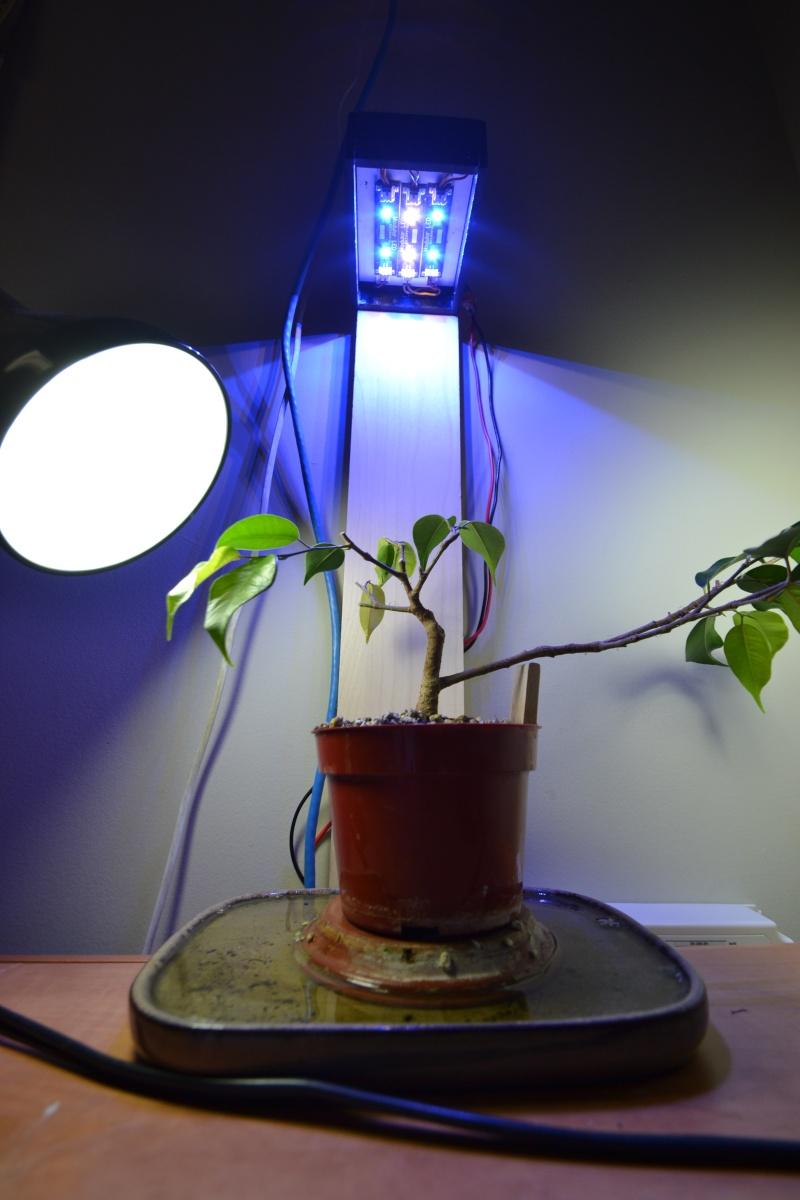 Indoor Bonsai under LED lights. - Page 14 Dsc_0312