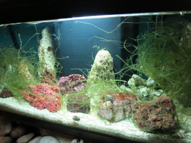 Aquarium BHMs Img_0712