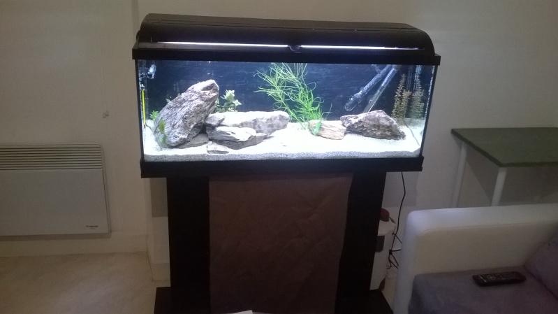 Lancement Aquarium 120l Wp_20111