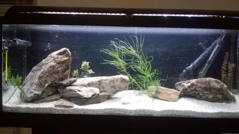 Lancement Aquarium 120l Wp_20112