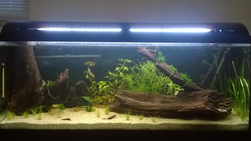 Lancement Aquarium 120l Wp_20113