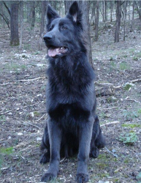 <Major> | <Stray> | <Dog> 7211