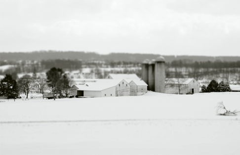 Dairy Farms Snowy-11
