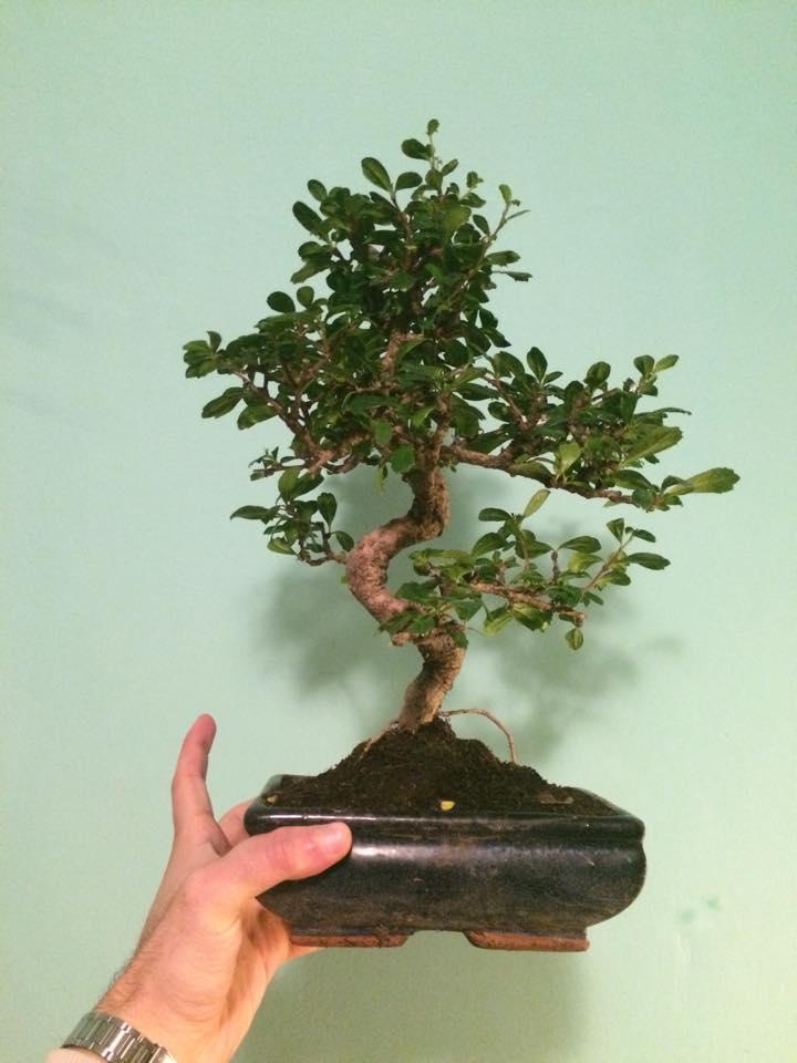 Primo bonsai!! 12650310