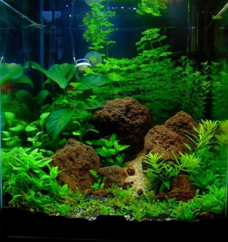 Nano Cube 30 L Style Aquascaping Plante Nano_110