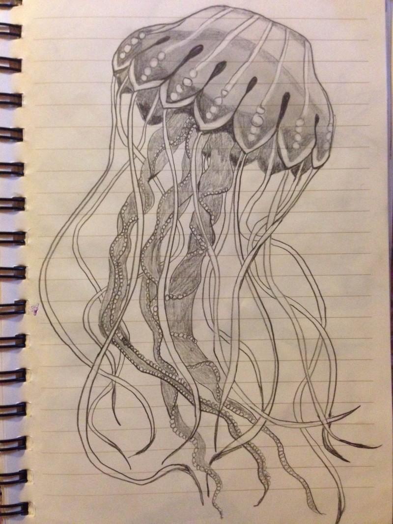 Jellyfish  Img_6118